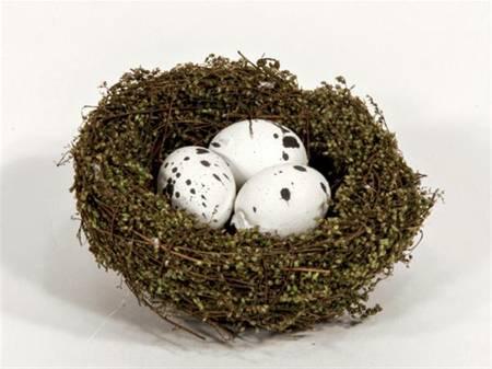 Fuglereir m egg S