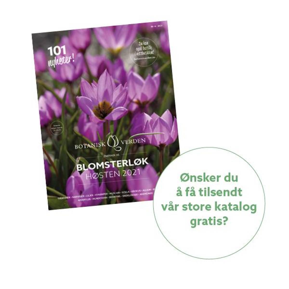 Bestill 'Blomsterløk høsten 2021'