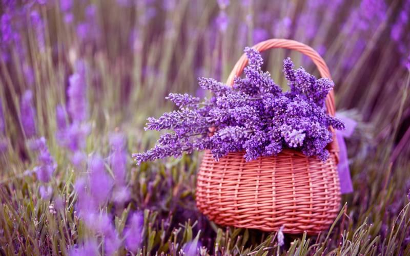 Weleda Lavendel Dusjkrem 200 ml
